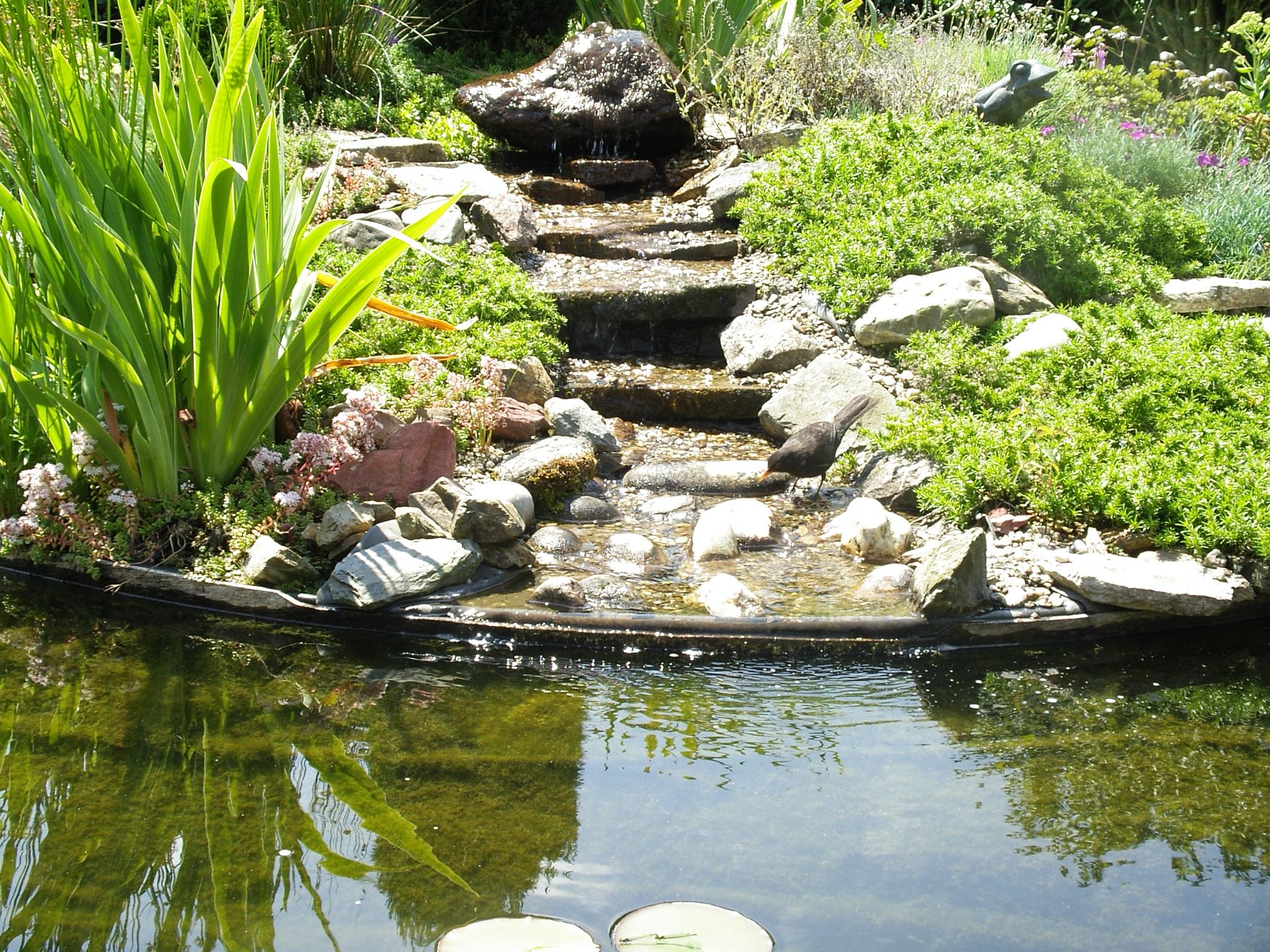 De tuin van arthur de groot - Amenager een rotstuin ...